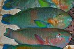 verschillende-vissen-bij-het-koraal-op-lombok